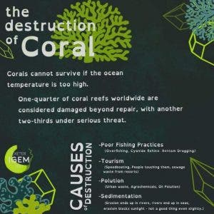 How 3D Printing is Being Used to Help Restore Coral Reefs